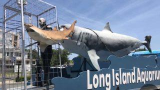 Long Island Aquarium(NYの水族館)行ってきたよ!サメへの愛を感じた!|アメリカ旅行