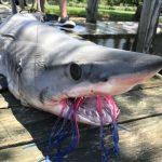 NYでサメ(メイコ)を釣ってきたぜ!アメリカシャークフィッシング Mako Shark Fishing